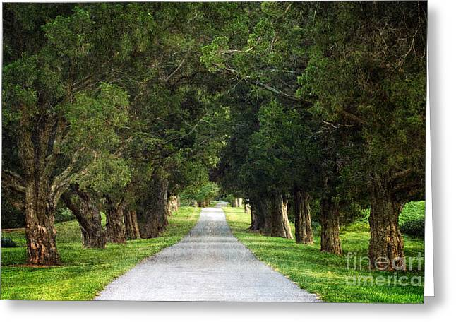 Country Lanes Digital Art Greeting Cards - Bucolic - D008564 Greeting Card by Daniel Dempster