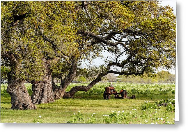 La Grange Greeting Cards - Bucolic Study in Smithville - Texas Greeting Card by Silvio Ligutti