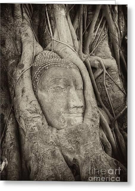Statue Portrait Greeting Cards - Buddha Head in Tree Greeting Card by Fototrav Print