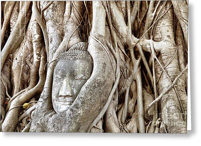 Statue Portrait Photographs Greeting Cards - Buddha Head in Tree Wat Mahathat Ayutthaya  Thailand Greeting Card by Fototrav Print