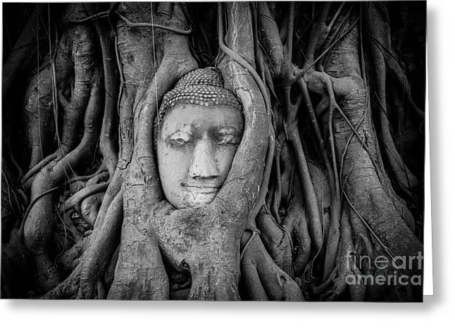Overgrown Greeting Cards - Buddha in the Banyan Tree Greeting Card by Dean Harte