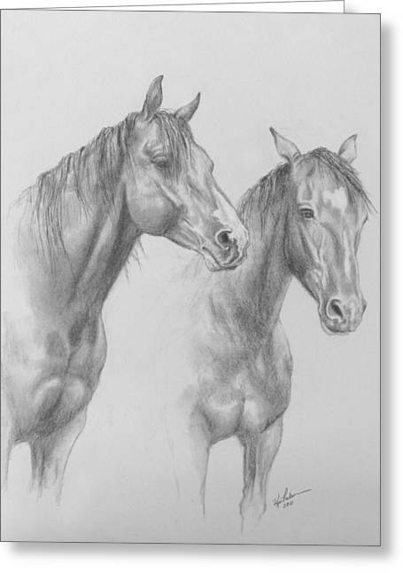 Wild Horse Greeting Cards - Buddies Greeting Card by Kim Lockman