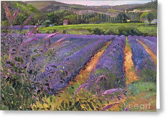 Buddleia And Lavender Field Montclus Greeting Card by Timothy Easton