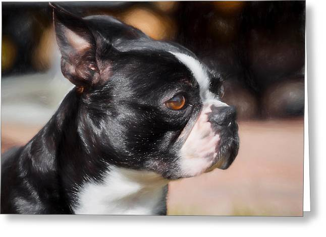 Boston Terrier Framed Prints Greeting Cards - Buddy Greeting Card by Gary Oliver