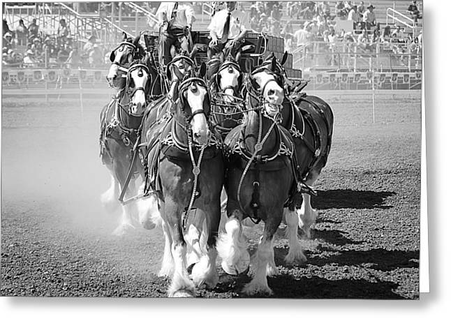 Recently Sold -  - Commercial Photography Greeting Cards - Budweiser Clydesdales 2 Greeting Card by Maria Jansson
