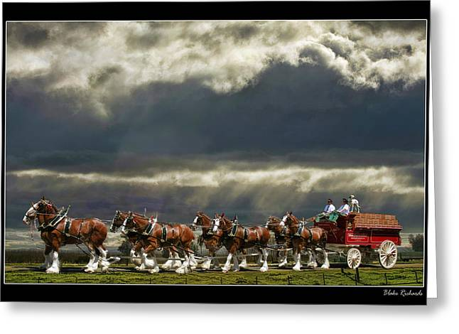 Horse Websites Greeting Cards - Budweiser Clydesdales Greeting Card by Blake Richards