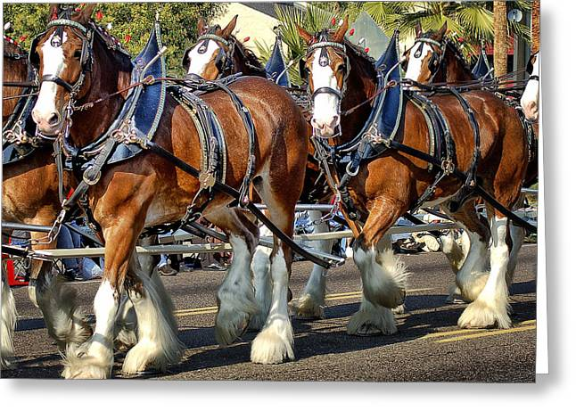 Budweiser Clydesdales Greeting Card by Jon Berghoff