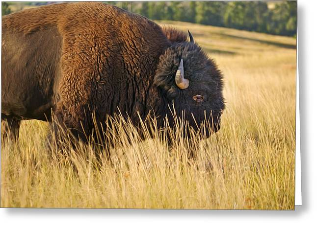 Buffalo Greeting Cards - Buff Buffalo Montana Painted Greeting Card by Rich Franco
