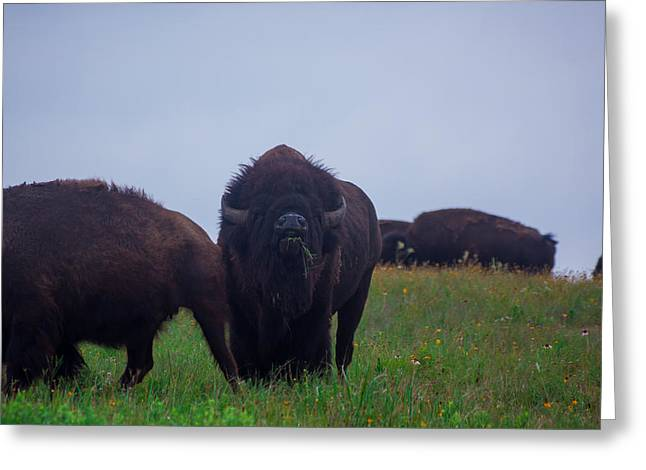 Tatanka Greeting Cards - Buffalo Greeting Card by Alvaro Ramirez