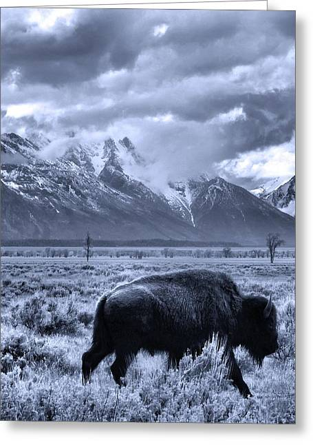 Buffalo And Mountain In Jackson Hole Greeting Card by Dan Sproul
