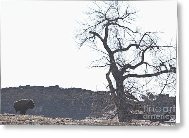 Buffalo Greeting Cards - Buffalo Breath in the Winter Air Greeting Card by James BO  Insogna