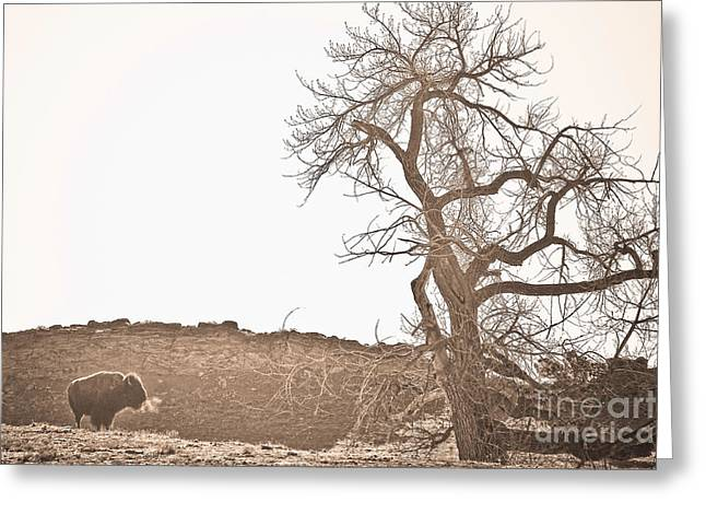 Wildlife Art Acrylic Prints Greeting Cards - Buffalo Breath Greeting Card by James BO  Insogna
