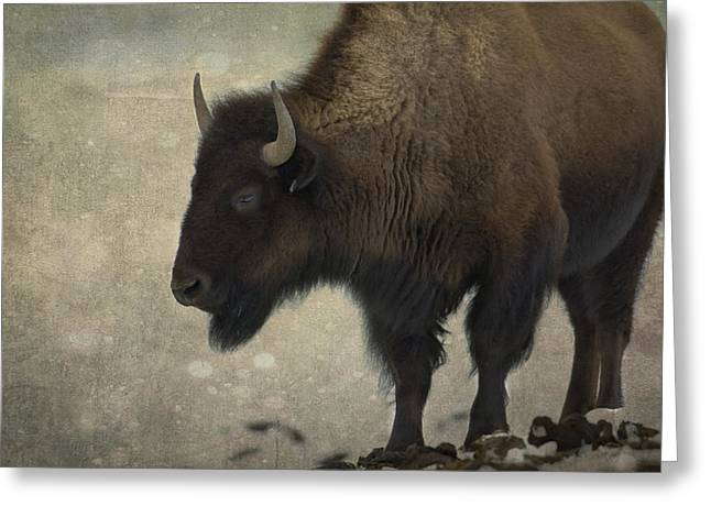 American Bison Greeting Cards - Buffalo Greeting Card by Juli Scalzi