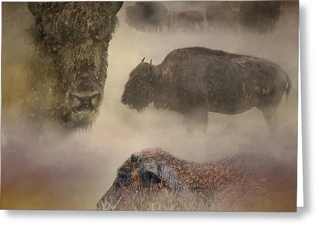 Buffalo Greeting Cards - Buffalo Dreams - Wildlife Greeting Card by Jai Johnson