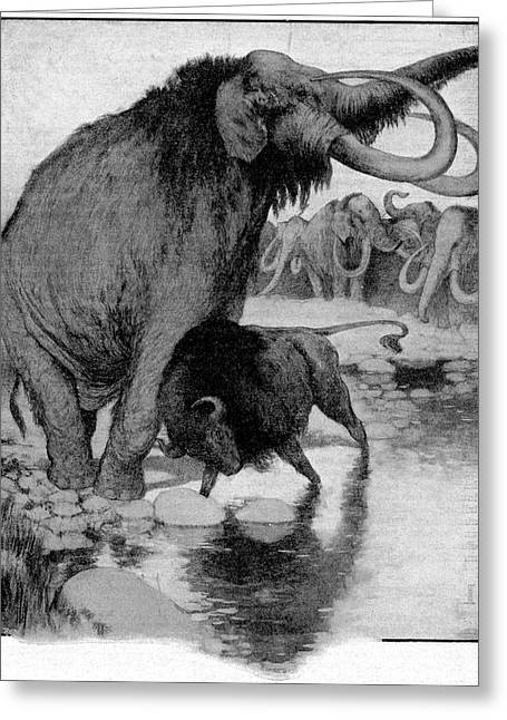 Buffalo Fighting A Mammoth Greeting Card by Cci Archives