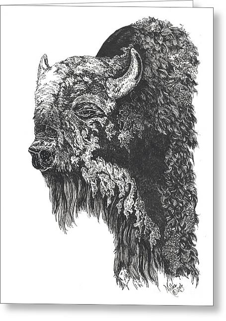 Buffalo In Spring Greeting Card by Meldra Driscoll