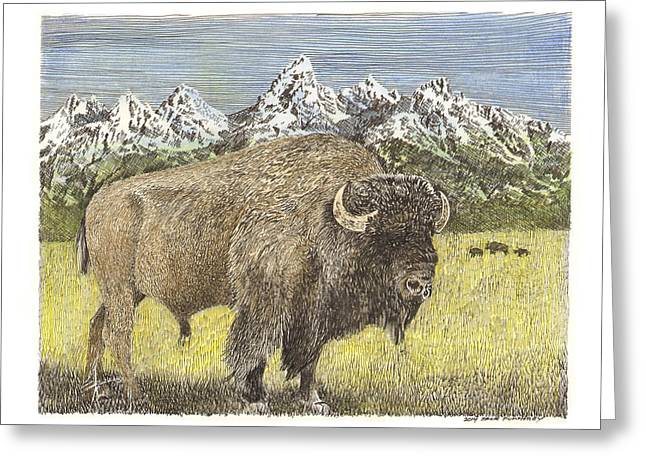 The American Buffalo Greeting Cards - Buffalo of Yellowstone National Park Greeting Card by Jack Pumphrey