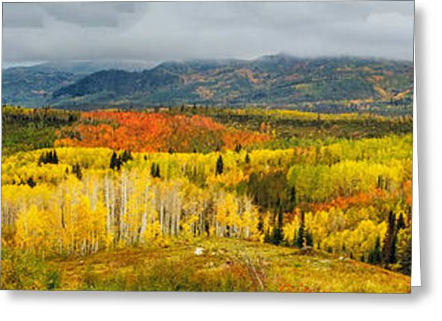 Scenic Drive Greeting Cards - Buffalo Pass Steamboat Springs CO Greeting Card by Teri Virbickis