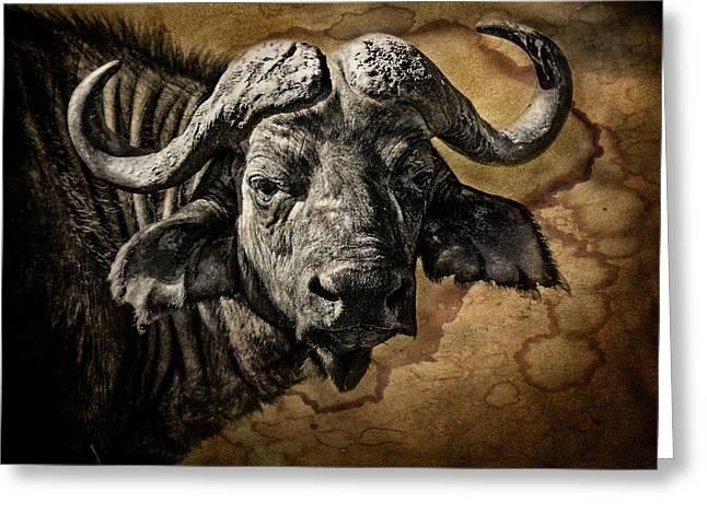 Buffalo Portrait Greeting Card by Mike Gaudaur