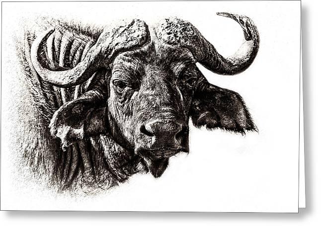 Close Up Buffalo Greeting Cards - Buffalo Sketch Greeting Card by Mike Gaudaur