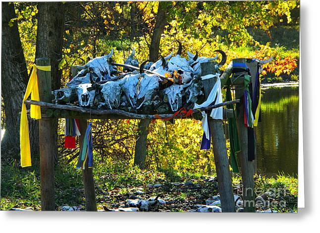 Indiana Autumn Greeting Cards - Buffalo Spiritual Grounds Greeting Card by Gary Richards
