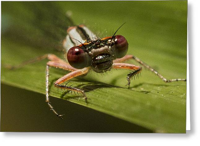 Insect Control Greeting Cards - Bug Eyes Greeting Card by Jean Noren