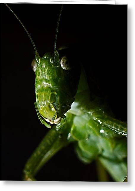 Wildlife Genre Greeting Cards - Bug Portrait Greeting Card by Ed  Cheremet
