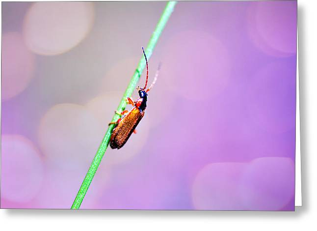 Green Hornets Greeting Cards - Bugg on a stick Greeting Card by Toppart Sweden