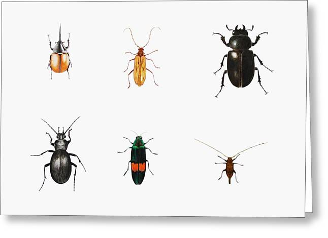 Biology Drawings Greeting Cards - Bugs Greeting Card by Ele Grafton