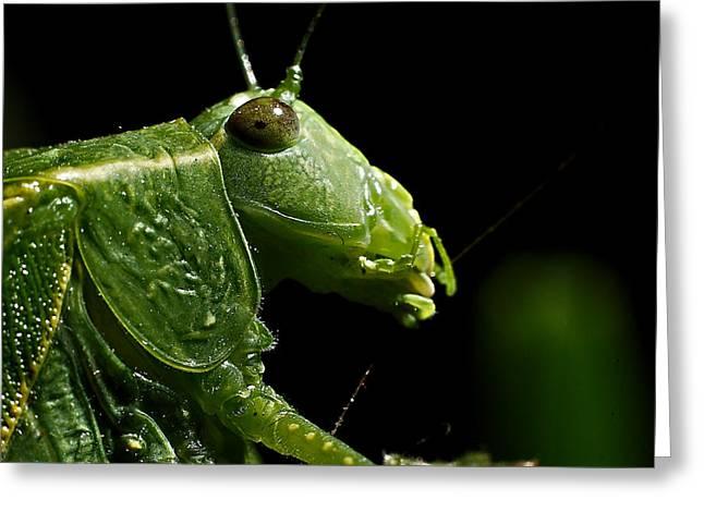 Wildlife Genre Greeting Cards - Bugs Eye Greeting Card by Ed  Cheremet