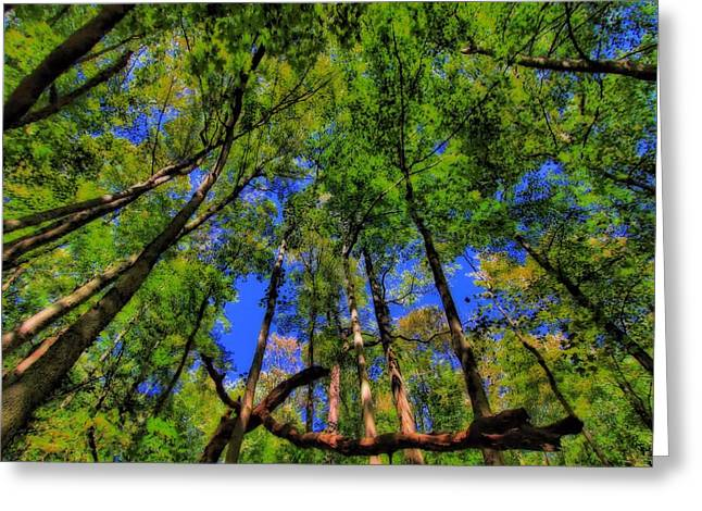 Tree Huggers Greeting Cards - Bugs Eye View Of The Forest Greeting Card by Dan Sproul