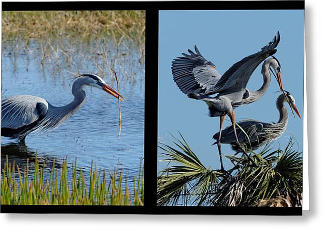 Cooperation Greeting Cards - Building our Nest Greeting Card by Dawn Currie