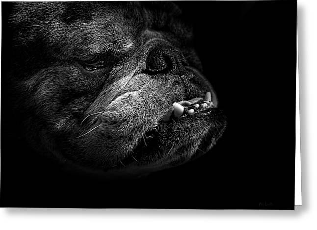 Nature Portrait Greeting Cards - Bull Dog Greeting Card by Bob Orsillo