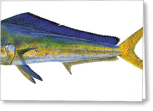 Striped Marlin Paintings Greeting Cards - Bull Dolphin Greeting Card by Carey Chen