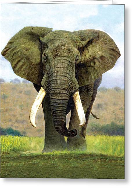 Tusk Greeting Cards - Bull Elephant Greeting Card by Chris Heitt