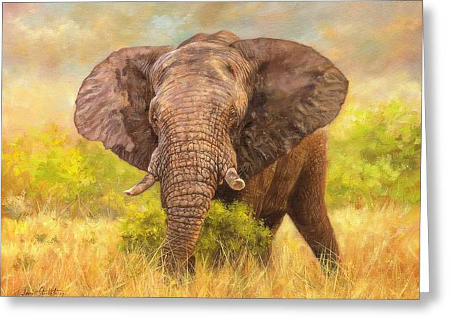 African Elephants Greeting Cards - Bull Elephant Greeting Card by David Stribbling