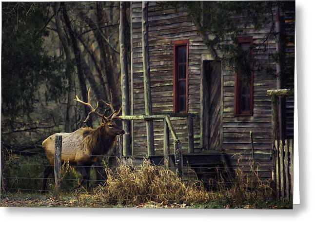 Boxley Valley Greeting Cards - Bull Elk by the Old Boxley Mill Greeting Card by Michael Dougherty