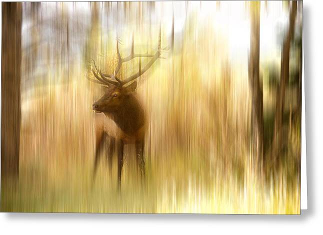 Abstract Movement Greeting Cards - Bull Elk Forest Gazing Greeting Card by James BO  Insogna