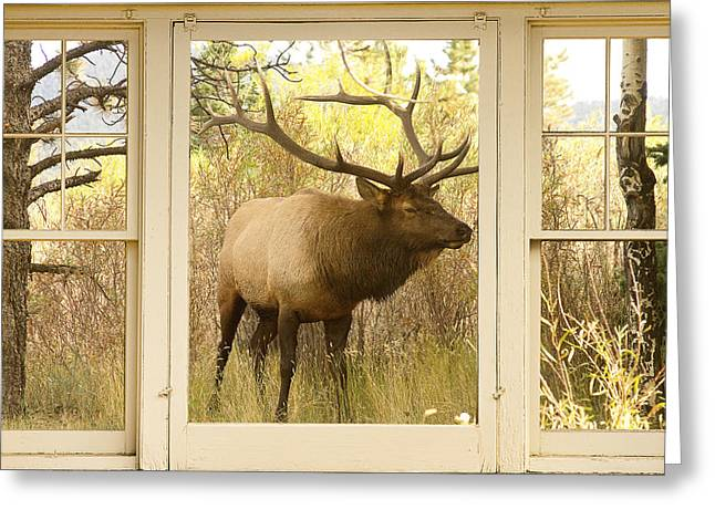 Window Art Greeting Cards - Bull Elk Window View Greeting Card by James BO  Insogna