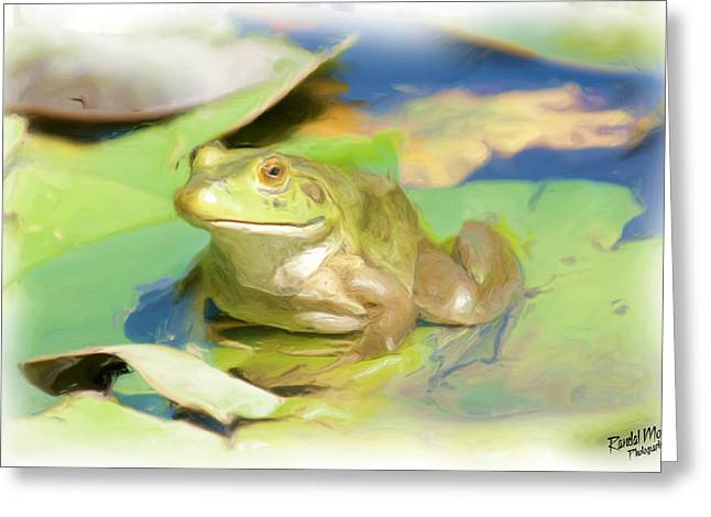 Randy Greeting Cards - Bull frog Greeting Card by A Hint of Color Photography