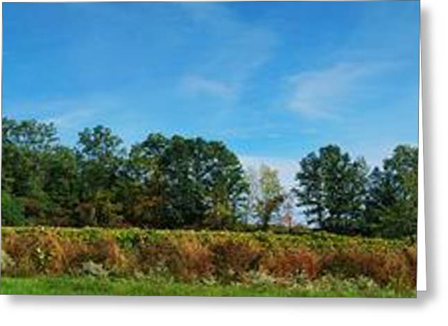 Bull Horn Creek Farm Wineyard New York Panoramic Photography Greeting Card by Paul Ge