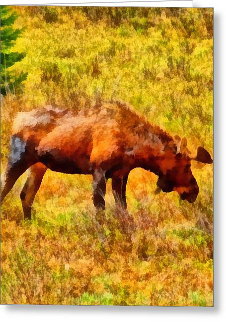 National Mixed Media Greeting Cards - Bull Moose Painting Greeting Card by Dan Sproul