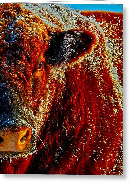 Wyoming Greeting Cards - Bull on Ice Greeting Card by Amanda Smith