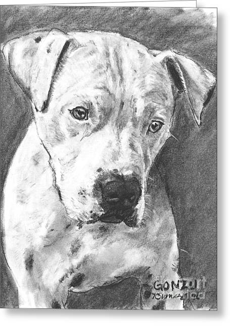 Rescue Drawings Greeting Cards - Bull Terrier Sketch in Charcoal  Greeting Card by Kate Sumners