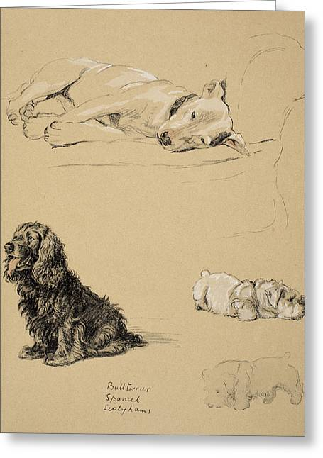 Bull-terrier, Spaniel And Sealyhams Greeting Card by Cecil Charles Windsor Aldin