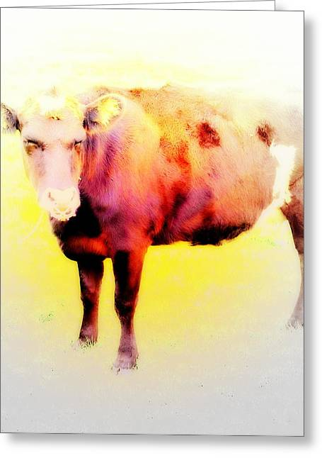 Helium Greeting Cards - Bull Time Coming  Greeting Card by Hilde Widerberg