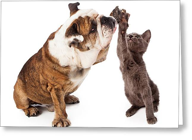 Friendly Greeting Cards - Bulldog and Kitten High Five  Greeting Card by Susan  Schmitz