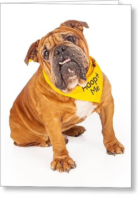 Animal Rescue Greeting Cards - Bulldog Wearing Adopt Me Bandana Greeting Card by Susan  Schmitz