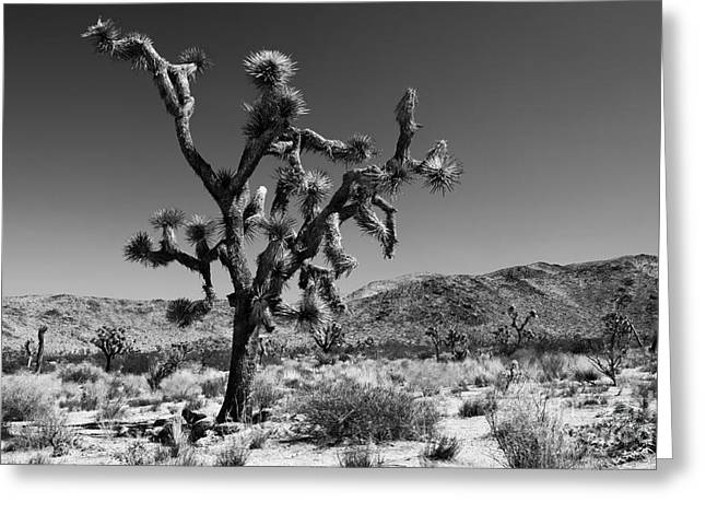 U2 Photographs Greeting Cards - Bullet The Blue Sky - Joshua Tree N.P Greeting Card by Henk Meijer Photography