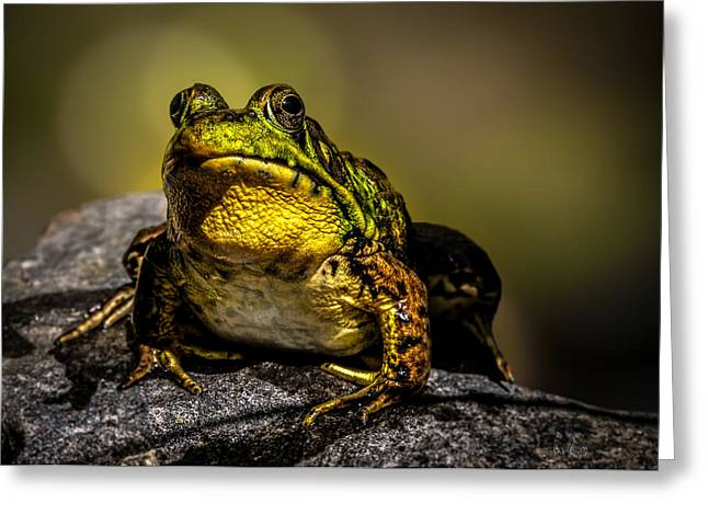 Frogs Photographs Greeting Cards - Bullfrog Watching Greeting Card by Bob Orsillo